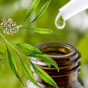 TEA TREE LEAF OIL Green Cure
