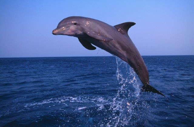 Parabens and their byproducts found in dolphins and other marine mammals